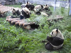 Panda House panda house, beijing zoo, beijing travel guide